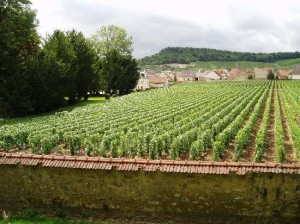 clos-du-mesnil-vineyard