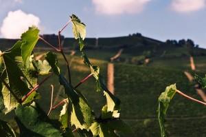 Felice Vines